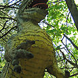 Dinoland_26