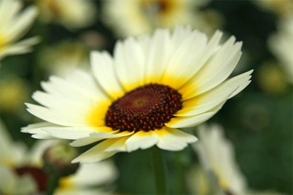 Emma_flowers2