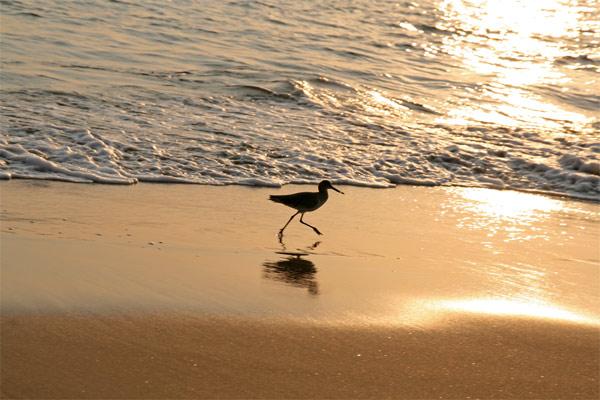 Playa_bird