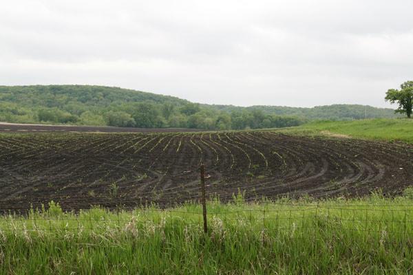 Iowa_corn