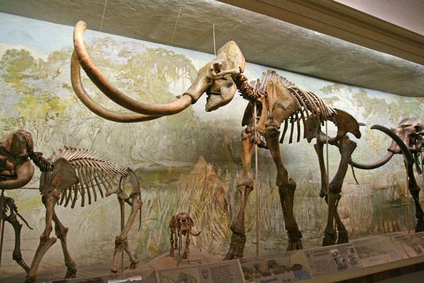 Mammoth_mammoth