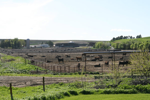 Plow_feedlot