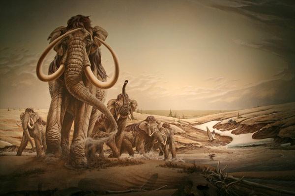 Mammoth_diorama