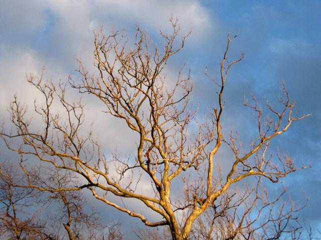 Tree031111