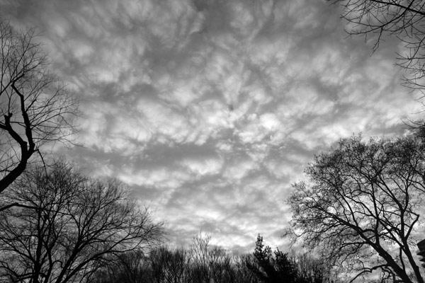 Treesclouds123010