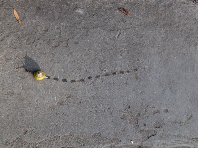 Snail_overhead