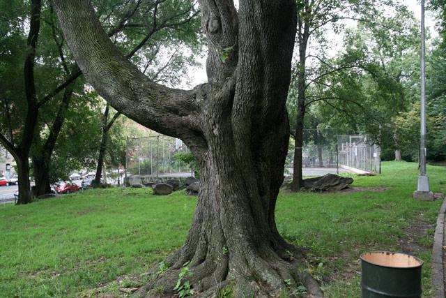 Irene_tree_before