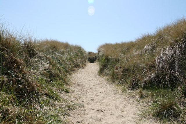 Orbeach_grass