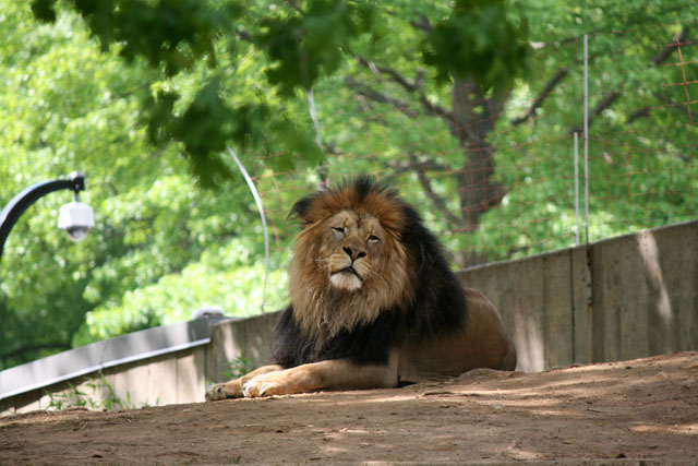 Zoo02