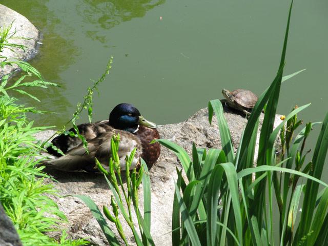 Turtles03