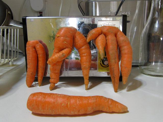 Mutant_carrots