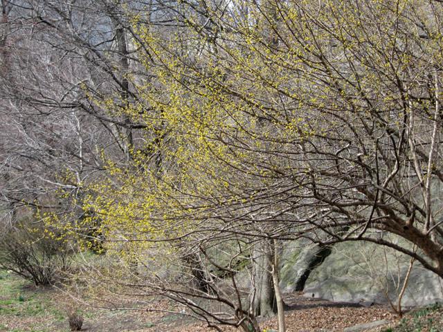 Yellow030412