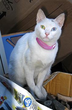white cat using flash