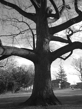 ldeo_tree.jpg