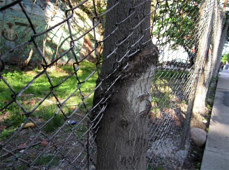 Fence_tree2