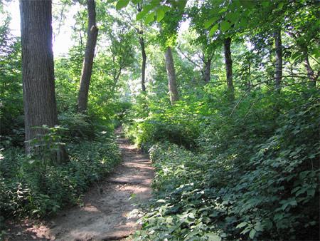 Cp_trail2