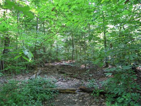 Cp_trail3