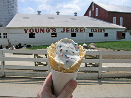 Image result for young's jersey dairy