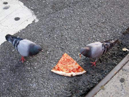 Patsys_pigeons