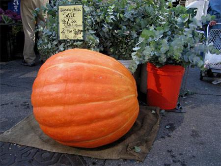 Mega_pumpkin