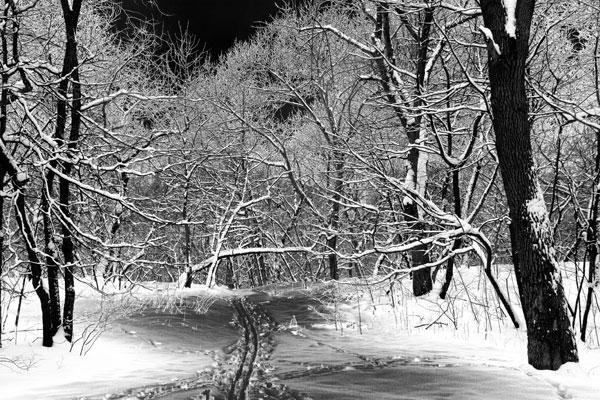 Bw_snow