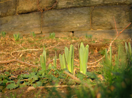 Early_spring_01
