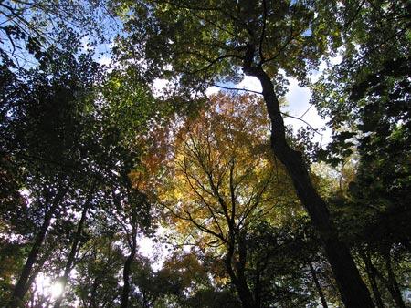 Fall_trees_01