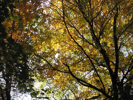 Fall_trees_03