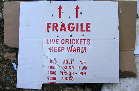 Fragile_crickets