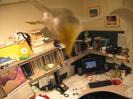 seagull and desk
