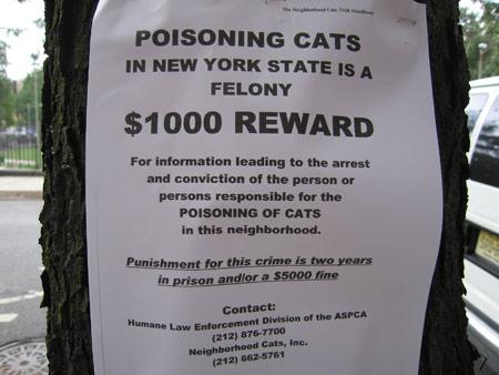 Poisoning_cats