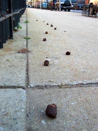 Poop_trail