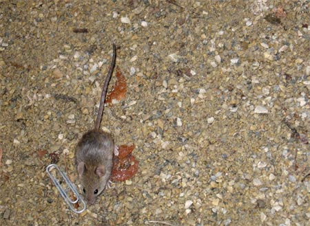 Shack_mouse_03