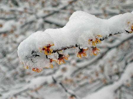 Snow_03244