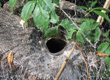 Spider_web_02