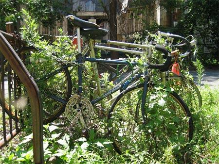 St_john_bikes