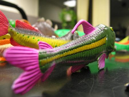 Striped_fish_1