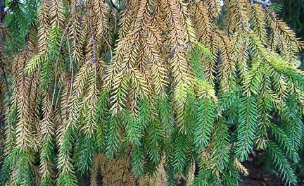 Treefade