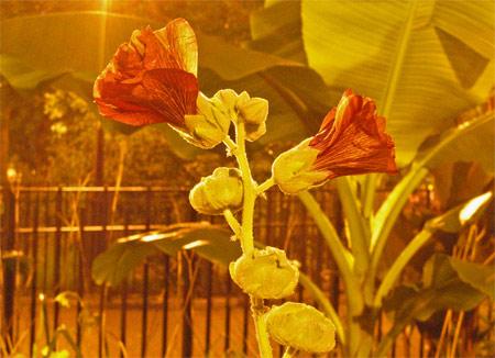 Ts_flowers
